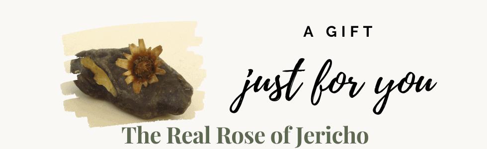 Rose of Jericho (1)