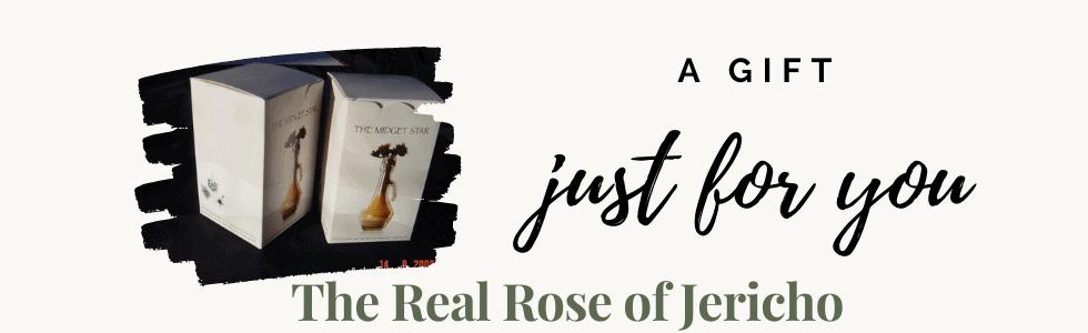 Rose of Jericho (2)