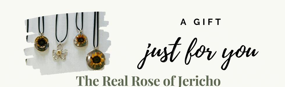 Rose of Jericho (3)